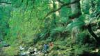 Wanderer im tasmanischen Urwald.