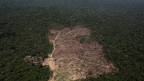 Pro Jahr verschwindet die Fläche so gross wie der Kanton Bern. Luftbild vom Amazonas-Regenwald in Brasilien.