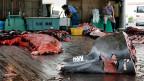 Arbeiter nach der Schlachtung eines Wals in Minamiboso, südwestlich von Tokio.