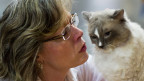 Schmusekatze oder Jägerin? Katzen dezimieren den Wildbestand, sagt der Tierschutz.