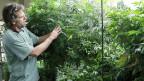Seit vergangenem Herbst ist im US-Bundesstaat Colorado nicht nur der Konsum, sondern auch Produktion und Verkauf von Marihuana erlaubt.