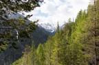Schweizer Bergwald