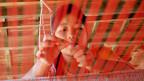Eine kambodschanische Arbeiterin in einer Seidenweberei.