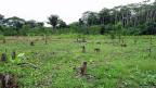 Ein Teil der Camino-Verde-Farm: Aufforstung im «Agroforestry»-System, Mischanbau Bäume, Obstbäume, Palmen, Bananen und anderes.