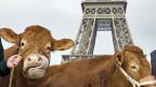 «Unerhört», klagt der französische Bauer mit den 1000 Kühen, «wir werden als Kriminelle bezeichnet - von Leuten, die keine Ahnung haben».