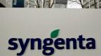 Logo von Syngenta. Die Firma pflanzt auf Hawaii genveränderte Pflanzen an.