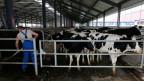 Eine neue Bodenreform sieht vor, das Verbot für den Verkauf von Ackerland aufzuheben. Doch die Kleinbauern sind nicht in der Lage, das gepachtete Land zu kaufen. Symbolbild.