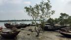 Mangrovenwälder im Delta des Ganges im Grenzgebiet von Indien und Bangladesch. Dort sind Tiger geschützt - die lokale Bevölkerung ist alles andere als begeistert über ihre wilden Mitbewohner.