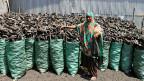 Hoher Preis für «schwarzes Gold» im Osten Kongos. Eine Holkohlen-Verkäuferin.