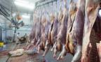 frisch geschlachtete Kälber in der Metzgerei Nyffenegger in Zollbrück
