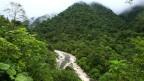 Costa Rica hat bereits vor 30 Jahren ein Programm gestartet, das Waldbesitzer entschädigt, wenn sie auf die Abholzung verzichten.