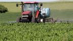 Das Pflanzenschutzmittel Atrazin ist in den USA weitverbreitet. Es wird auf 70 Prozent der Maisfelder gespritzt. In der EU ist es verboten.