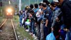 Warten auf einen Zug nach Norden: Syrische, afghanische und pakistanische Flüchtlinge an der mazedonisch-serbischen Grenze.