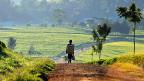 Bewässerung und gute Strassen - diese Rechnung scheint am Mount Kenya aufzugehen: Für den Teebauern im Beitrag wird mit der neuen Strasse der Weg in die nächste Stadt von zwei Stunden auf 20 Minuten verkürzt. Bild: Ein Teepflücker auf dem Weg zur Arbeit.