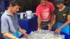 Wer Fische und Meeresfrüchte aus Thailand kaufe, der müsse damit rechnen, dass diese von Sklavenarbeitern gefangen worden seien.