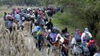 Flüchtlinge in Kroatien kurz nach der slowenischen Grenze.
