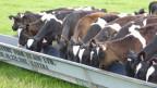 Neuseelands Bauern verdienen mit ihrer Milch deutlich weniger als noch vor zwei Jahren.