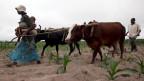160'000 Kühe sind wegen der Dürre verendet; 12'000 Wasserlöcher sind trocken.
