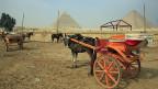 Die Mutter der Welt, so nennen die Ägypter unbescheiden ihre Nation. Die regionale Ausstrahlung ist nur noch ferne Erinnerung. Bild: Pferdekutschen warten auf Touristen. Vergeblich.
