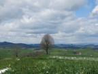 Ein Hügel in Eriswil, wo die Windturbine dereinst stehen soll