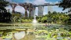 Singapur in grün: Grüne Bauten, grün bepflanzte Häuser, Parks und Naturreservate.