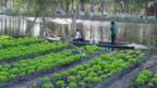 Wie früher die Azteken wollen junge Landwirte in den Chinampas im Süden von Mexiko-Stadt Landwirtschaft betreiben.