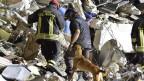 43 Hunde sind nach dem Erdbeben auf der Suche nach Verschütteten.
