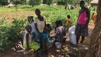 Auch für die ugandische Regierung sind die Flüchtlinge ein Gewinn: Sie machen nämlich verbuschtes Land urbar und sorgen dafür, dass internationale Hilfsorganisationen ins Land kommen – und mit ihnen Gelder aus dem reichen Teil der Welt.
