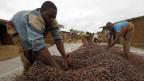 Die meisten Menschen in Afrika sind in der Landwirtschaft tätig. Dennoch müssen afrikanische Länder Nahrungsmittel importieren im grossen Stil.
