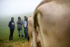 Eritreische Asylsuchende bei einer Viehschau in Trogen
