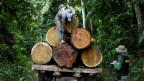Von August 2015 bis Ende Juli 2016 sei eine Regenwaldfläche fast 8'000 Quadratkilometern zerstört worden.