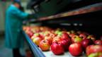 Dass der russische Präsident im Sommer 2014 ausgerechnet Lebensmittel für den Gegenschlag ausgesucht hat, war kein Zufall: Von einem Tag auf den anderen konnte das EU-Land Polen seine Äpfel nicht mehr nach Russland verkaufen. Im Jahr davor waren Äpfel für 273 Millionen Euro nanch Russland exportiert worden.