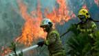 In Chile stehen grosse Gebiete in Flammen. Es brennen vor allem Eukalyptus- und Kiefern-Monokulturen, mit denen Holz für Papierfabriken und Spanplatten produziert wird.