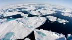 In der fragilen Arktis waren diesen Winter die Temperaturen stellenweise 20 bis 30 Grad höher als normal - also statt minus 30 war es 0 Grad.