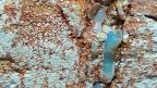 Opale sind eine Kombination von Siliziumoxid und Wasser, entstanden über Millionen Jahre, unter dem grossen Druck des umliegenden Gesteins. Das Ergebnis: Ein Mineral, in dem die ganze Pracht der Natur eingefangen sei, wie Sammler schwärmen – die Farben des Regenbogens, Feuer, Blitze, das Schimmern des Meeres.