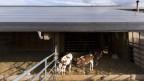 Die Solaranlage auf dem Kuhstall. Die Bauern hoffen, von der Energiewende profitieren zu können.