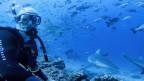 SRF-Korrespondent Urs Wälterlin 22 Meter unter der Oberfläche – inmitten von Haien.
