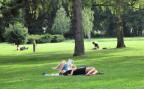 Eine Rasenfläche auf dem Areal des Friedhofs Sihlfeld in Zürich.