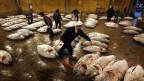 Grosse gefrorene Thunfische und Arbeiter in einer Lagerhalle auf Tokios Fischmarkt.