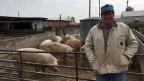 Der Schweinefarmer Dave Struthers.