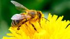 Ohne Bienen sähe unsere Welt kahl aus und unsere Teller wären fast leer.