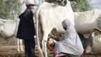 Die aus dem Norden stammenden Viehhirten sind primär Muslime und vom Volk der Fulani.