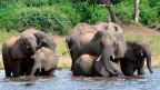 Elefanten trinken Wasser im Chobe National Park in Botswana. Archivbild.