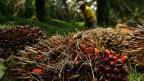 Palmöl-Plantage in Indonesien: Multilaterale Umweltabkommen müssen eingehalten und die Grundrechte der Arbeiter garantiert werden.