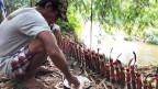Der Dorfälteste der indigenen Dayak beschwört die Geister, damit sie helfen, Blüten in Früchte zu verwandeln.