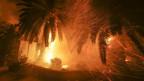 Zehntausende sind in Kalifornien auf der Flucht vor der Feuersbrunst.