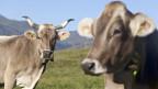 Mit Horn, ohne Horn: Das soll nicht über Subventionen entscheiden