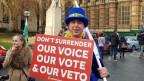 Die Brexit-Befürworter haben sich an der Strasse vor dem Parlament aufgereiht.