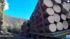 Umweltschützer Paun erzählt, er sei einem Holztransport gefolgt - von einem geschützten Wald direkt ins Sägewerk.