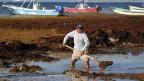 Ein Arbeiter entfernt mit einer Schaufel Algen vom Ufer von Playa del Carmen, Mexiko.
